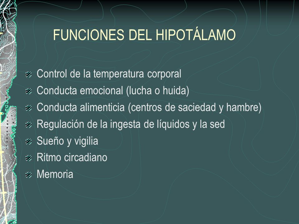 FUNCIONES DEL HIPOTÁLAMO Control de la temperatura corporal Conducta emocional (lucha o huida) Conducta alimenticia (centros de saciedad y hambre) Reg