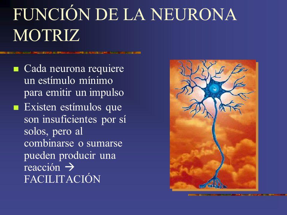 FUNCIÓN DE LA NEURONA MOTRIZ Cada neurona requiere un estímulo mínimo para emitir un impulso Existen estímulos que son insuficientes por sí solos, per