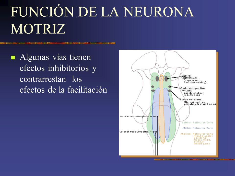 FUNCIÓN DE LA NEURONA MOTRIZ Algunas vías tienen efectos inhibitorios y contrarrestan los efectos de la facilitación
