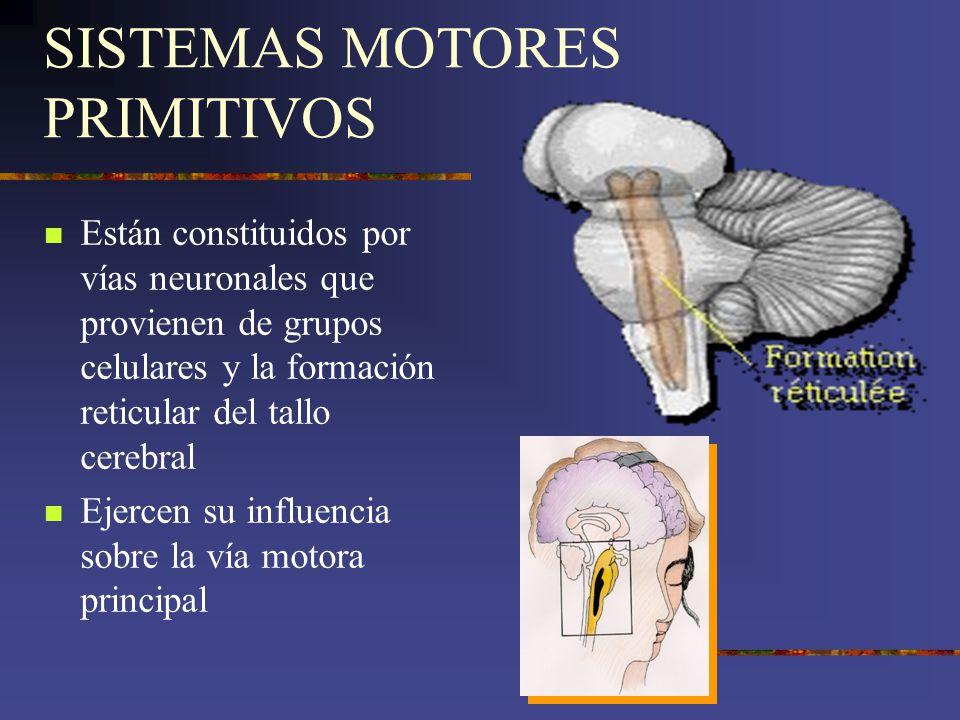 SISTEMAS MOTORES PRIMITIVOS Están constituidos por vías neuronales que provienen de grupos celulares y la formación reticular del tallo cerebral Ejerc
