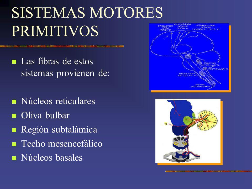 SISTEMAS MOTORES PRIMITIVOS Las fibras de estos sistemas provienen de: Núcleos reticulares Oliva bulbar Región subtalámica Techo mesencefálico Núcleos