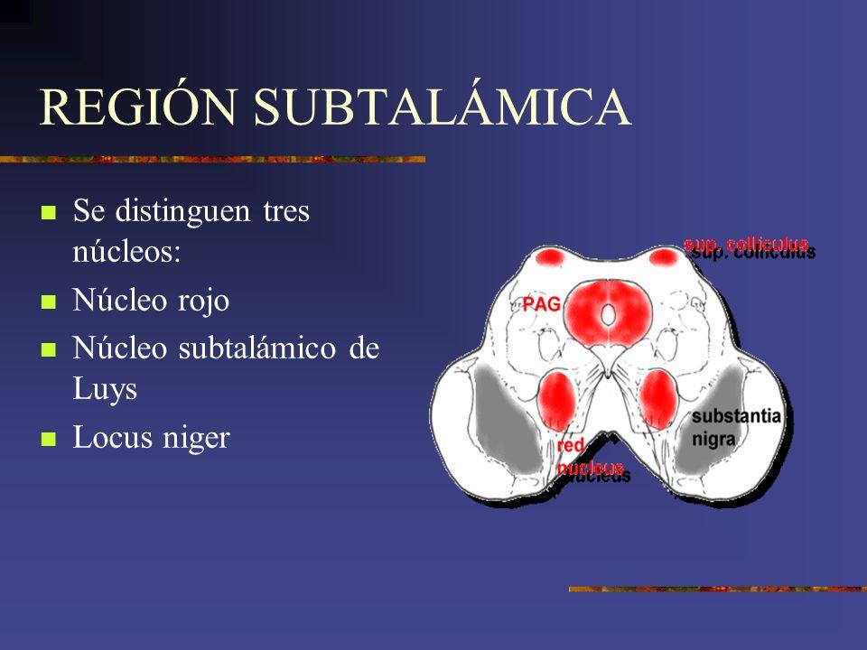 REGIÓN SUBTALÁMICA Se distinguen tres núcleos: Núcleo rojo Núcleo subtalámico de Luys Locus niger