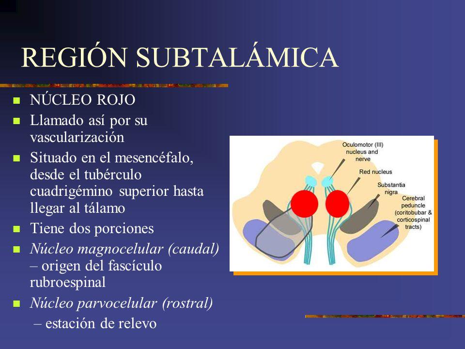 REGIÓN SUBTALÁMICA NÚCLEO ROJO Llamado así por su vascularización Situado en el mesencéfalo, desde el tubérculo cuadrigémino superior hasta llegar al