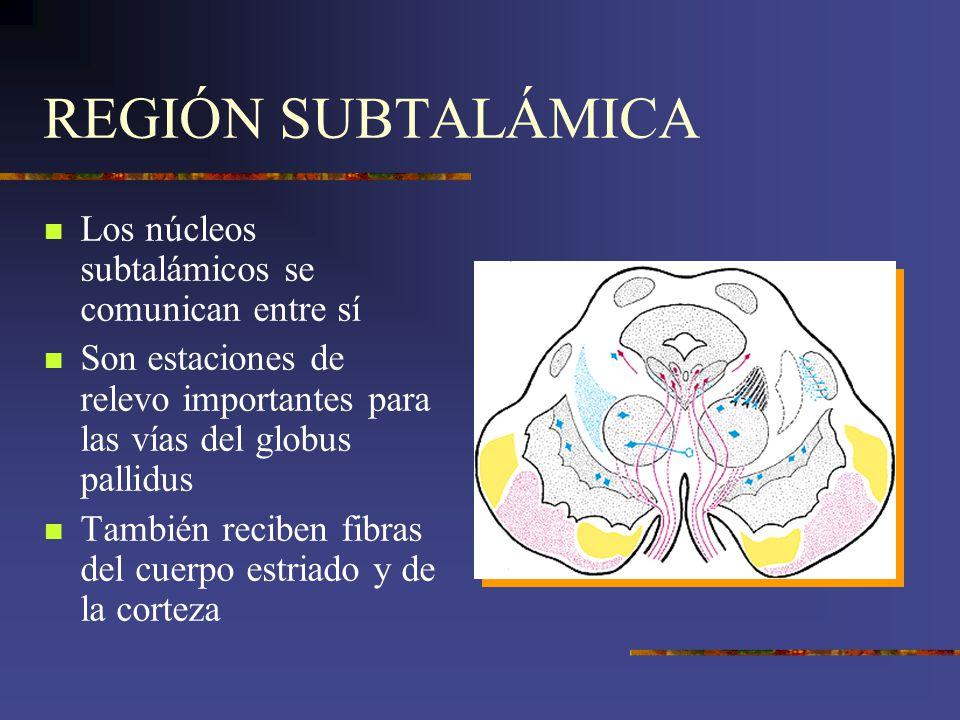 REGIÓN SUBTALÁMICA Los núcleos subtalámicos se comunican entre sí Son estaciones de relevo importantes para las vías del globus pallidus También recib