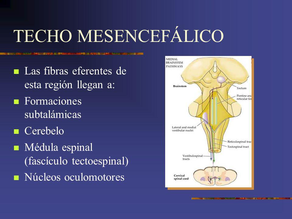 TECHO MESENCEFÁLICO Las fibras eferentes de esta región llegan a: Formaciones subtalámicas Cerebelo Médula espinal (fascículo tectoespinal) Núcleos oc