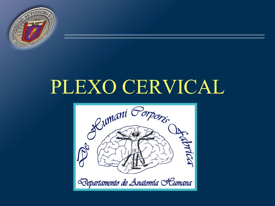 NERVIO FRÉNICO (C3, C4, C5) Relaciones: –Vena subclavia –Arterias mamaria interna –Arteria diafragmática superior –Hilio pulmonar