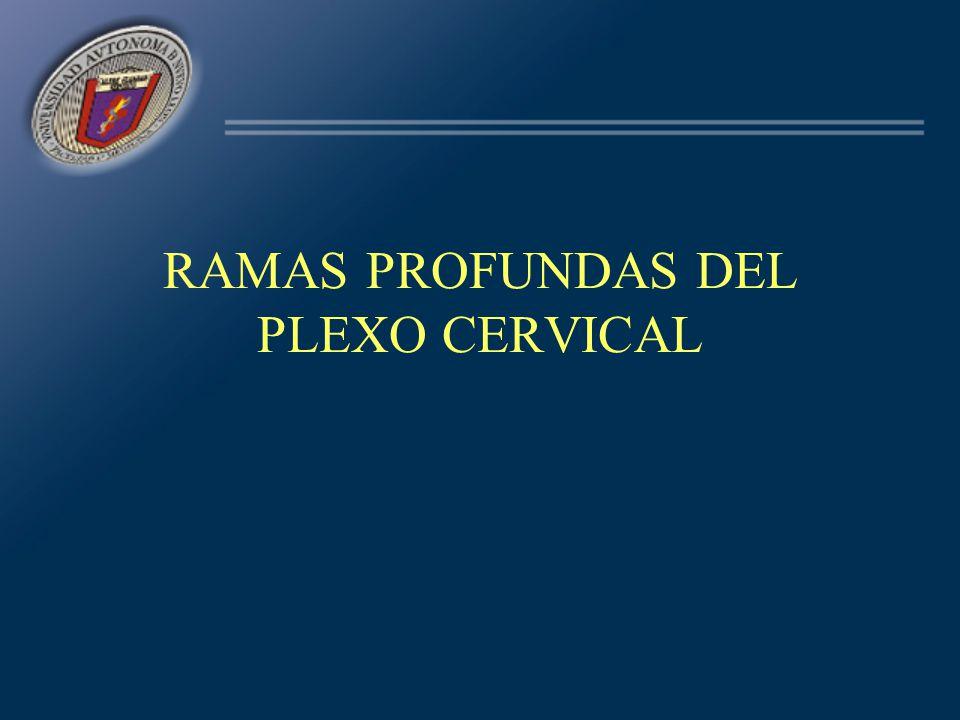RAMAS PROFUNDAS DEL PLEXO CERVICAL