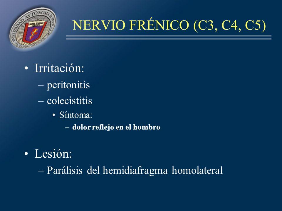 NERVIO FRÉNICO (C3, C4, C5) Irritación: –peritonitis –colecistitis Síntoma: –dolor reflejo en el hombro Lesión: –Parálisis del hemidiafragma homolater