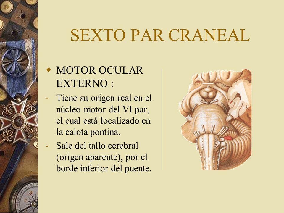 SEXTO PAR CRANEAL MOTOR OCULAR EXTERNO : -Tiene su origen real en el núcleo motor del VI par, el cual está localizado en la calota pontina. -Sale del