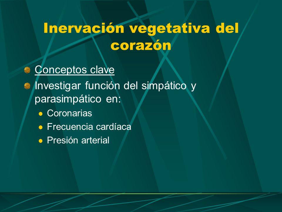 Del lado derecho se acompañan los nervios cardiacos medio del simpático cervical y el superior del vago Del lado izquierdo descienden separados entre las arterias subclavia y carótida primitiva.