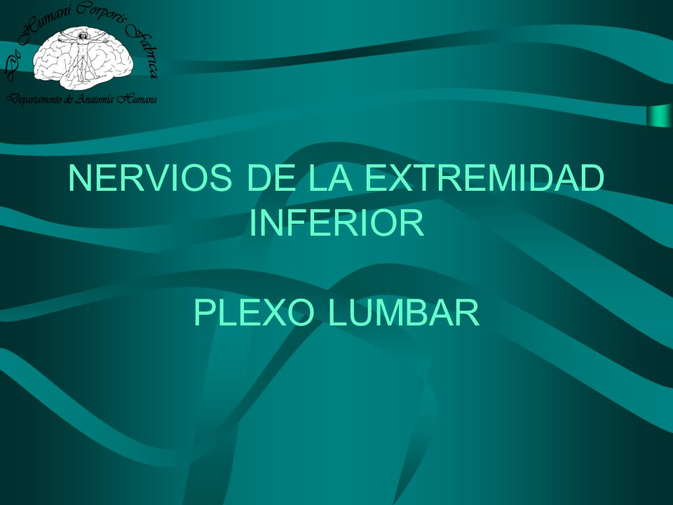 Lesiones de: –Nervio crural –Nervio obturador PLEXO LUMBAR