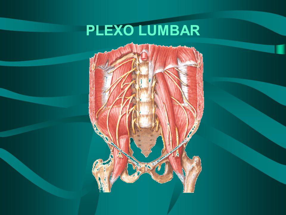 LESIÓN MOTORA DEL NERVIO CRURAL Se caracteriza por parálisis del músculo cuadríceps crural.