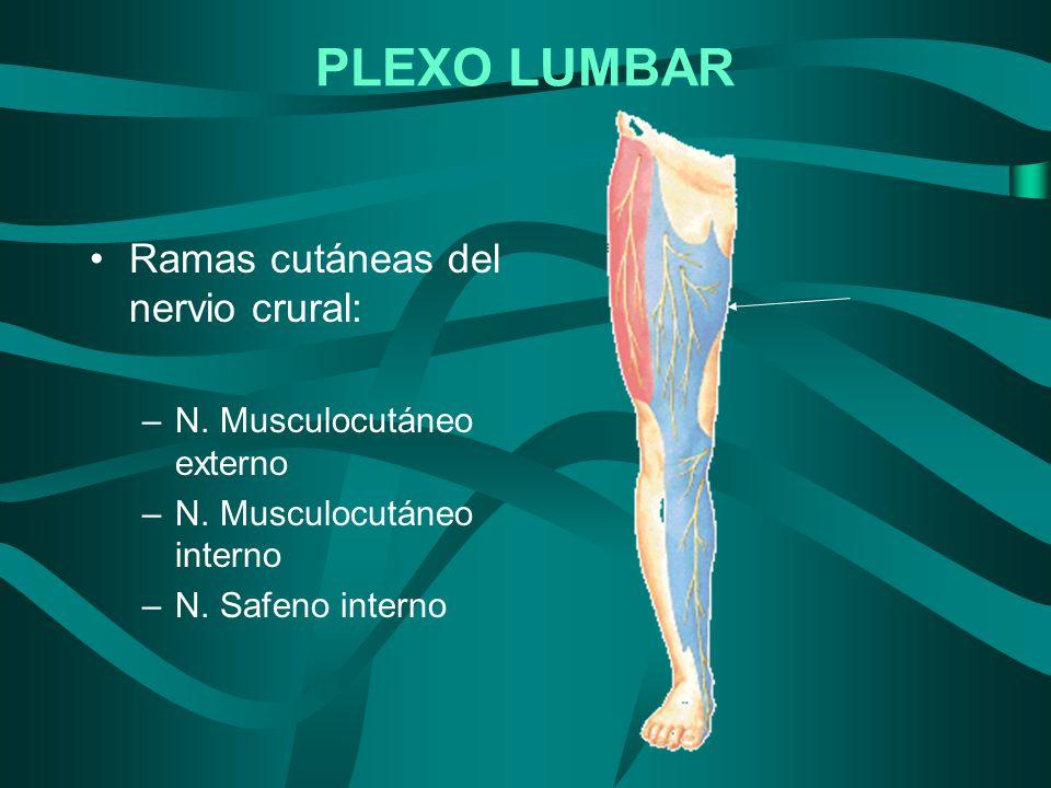 Ramas cutáneas del nervio crural: –N. Musculocutáneo externo –N. Musculocutáneo interno –N. Safeno interno PLEXO LUMBAR