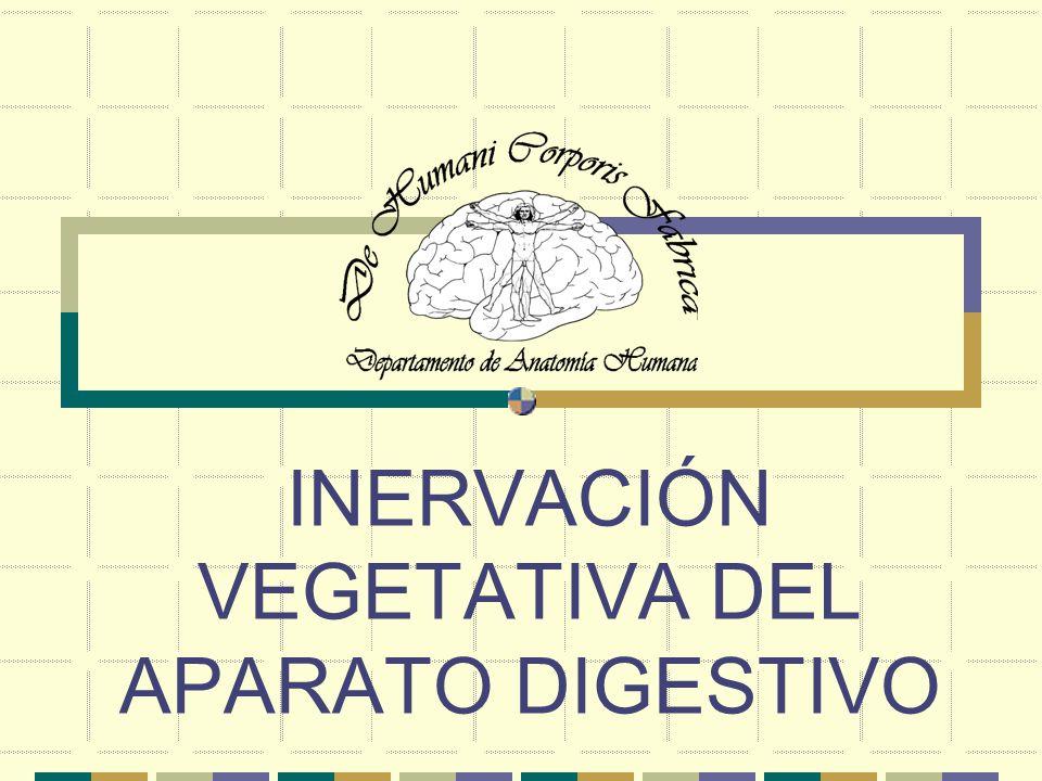 INERVACIÓN VEGETATIVA DEL APARATO DIGESTIVO CONCEPTOS CLAVE La estimulación vagal produce secreción más copiosa de ácido por las glándulas de la curvatura menor que por las de la mayor.