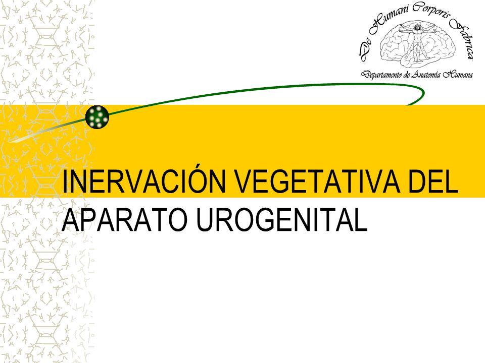 INERVACIÓN VEGETATIVA DEL APARATO UROGENITAL