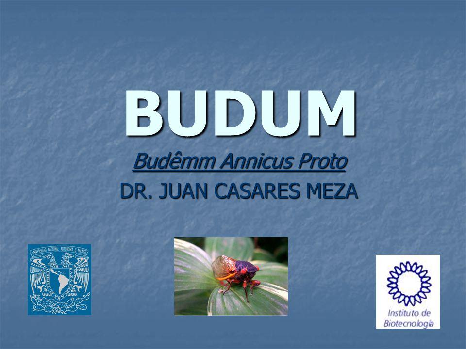 BUDUM Budêmm Annicus Proto DR. JUAN CASARES MEZA