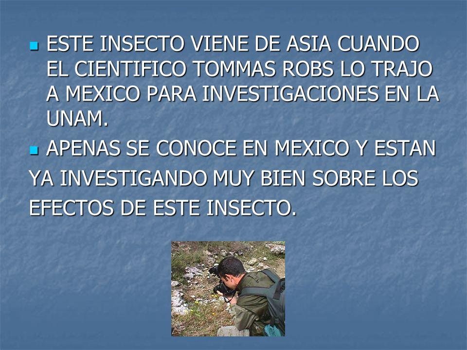 ESTE INSECTO VIENE DE ASIA CUANDO EL CIENTIFICO TOMMAS ROBS LO TRAJO A MEXICO PARA INVESTIGACIONES EN LA UNAM. ESTE INSECTO VIENE DE ASIA CUANDO EL CI