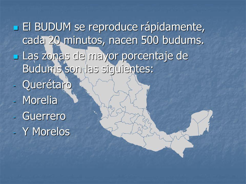 El BUDUM se reproduce rápidamente, cada 20 minutos, nacen 500 budums. El BUDUM se reproduce rápidamente, cada 20 minutos, nacen 500 budums. Las zonas