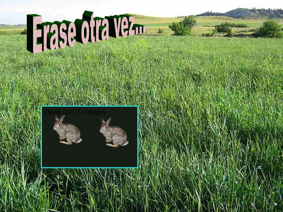 Jaula con 2 conejos