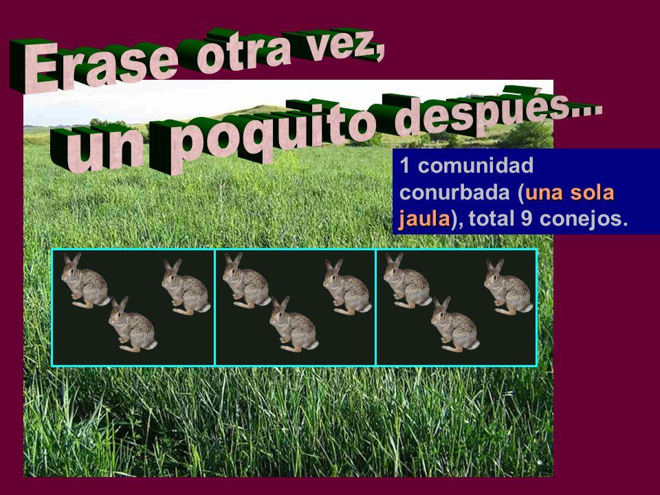 una sola jaula 1 comunidad conurbada (una sola jaula), total 9 conejos.
