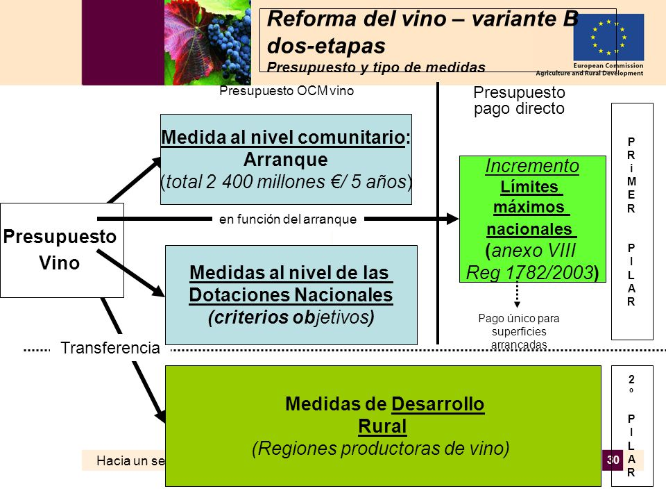 Hacia un sector vitivinícola europeo sostenible AGRI – C3 MD 02.06.2006 30 Reforma del vino – variante B dos-etapas Presupuesto y tipo de medidas Presupuesto Vino Medida al nivel comunitario: Arranque (total 2 400 millones / 5 años) Incremento Límites máximos nacionales (anexo VIII Reg 1782/2003) Medidas de Desarrollo Rural (Regiones productoras de vino) Presupuesto OCM vino Presupuesto pago directo en función del arranque PRiMERPILARPRiMERPILAR 2ºPILAR2ºPILAR Pago único para superficies arrancadas Transferencia Medidas al nivel de las Dotaciones Nacionales (criterios objetivos)