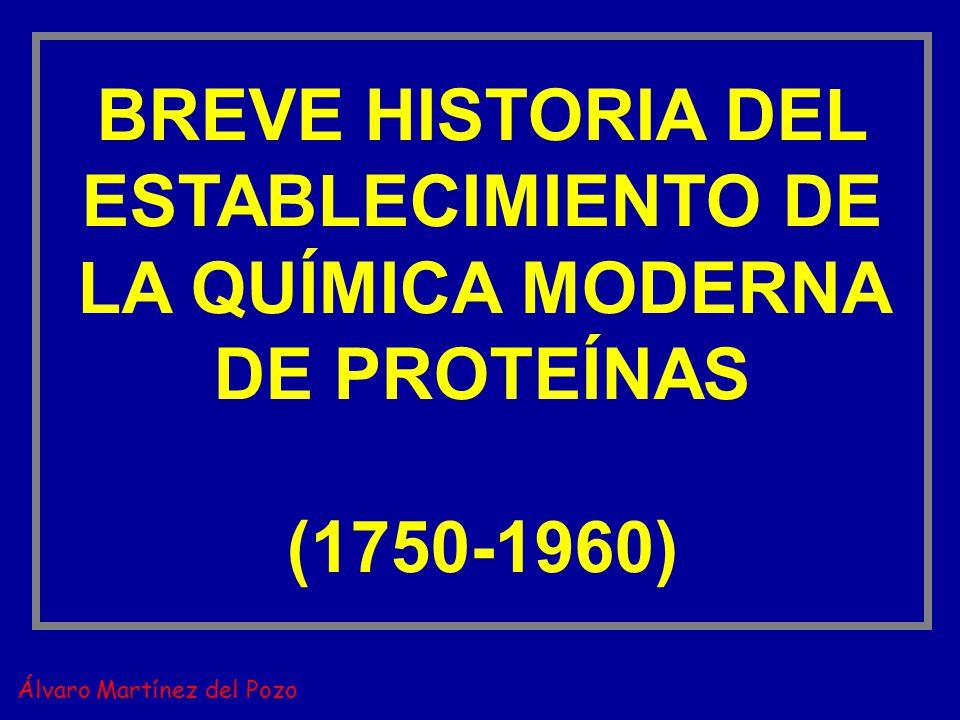 BREVE HISTORIA DEL ESTABLECIMIENTO DE LA QUÍMICA MODERNA DE PROTEÍNAS (1750-1960) Álvaro Martínez del Pozo