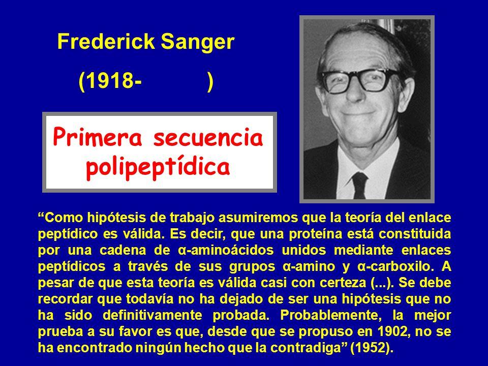 Frederick Sanger (1918- ) Como hipótesis de trabajo asumiremos que la teoría del enlace peptídico es válida. Es decir, que una proteína está constitui