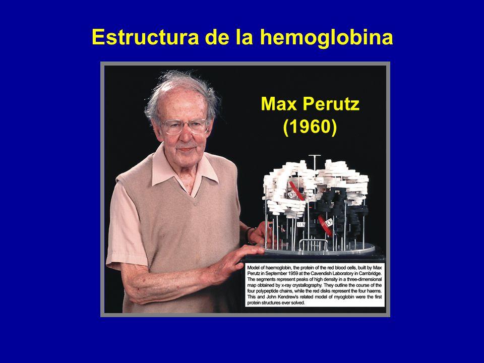 Max Perutz (1960) Estructura de la hemoglobina