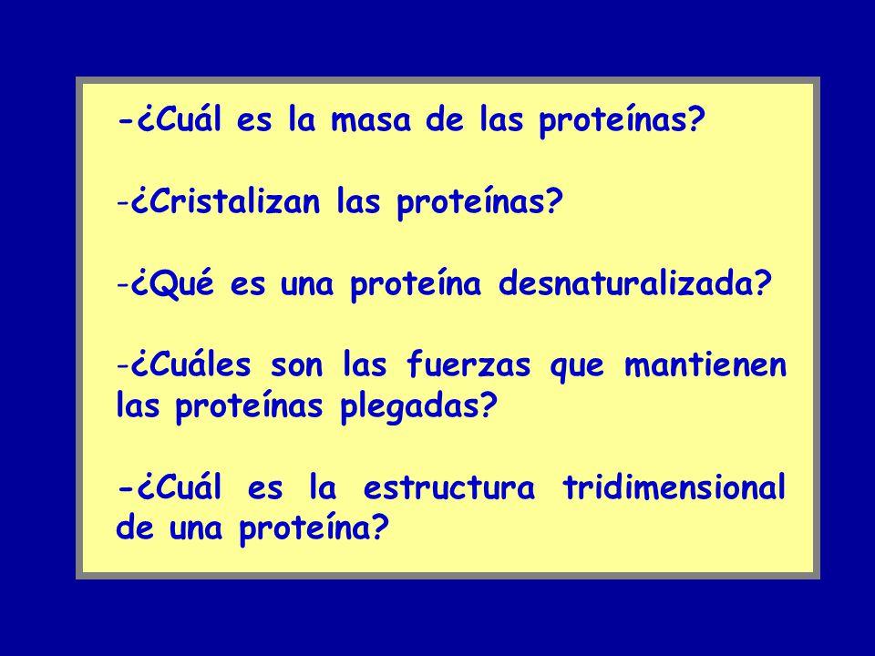-¿Cuál es la masa de las proteínas? -¿Cristalizan las proteínas? -¿Qué es una proteína desnaturalizada? -¿Cuáles son las fuerzas que mantienen las pro