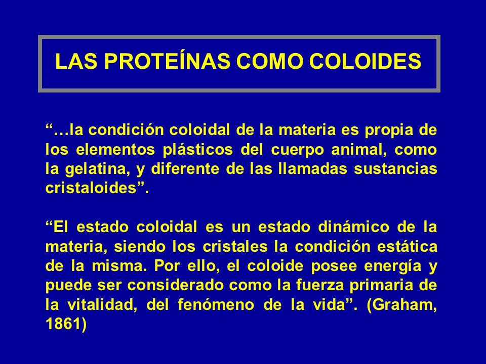 LAS PROTEÍNAS COMO COLOIDES …la condición coloidal de la materia es propia de los elementos plásticos del cuerpo animal, como la gelatina, y diferente