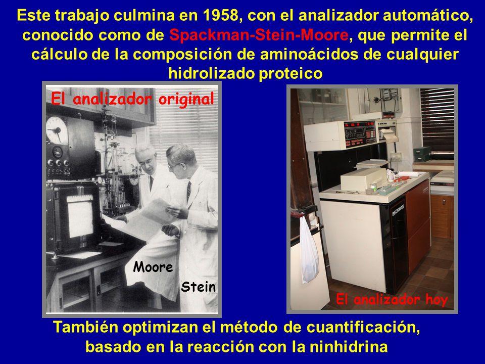 Este trabajo culmina en 1958, con el analizador automático, conocido como de Spackman-Stein-Moore, que permite el cálculo de la composición de aminoác