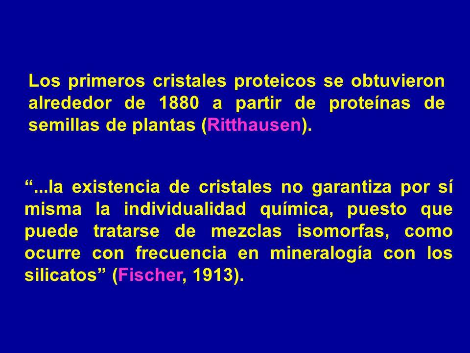 Los primeros cristales proteicos se obtuvieron alrededor de 1880 a partir de proteínas de semillas de plantas (Ritthausen)....la existencia de cristal