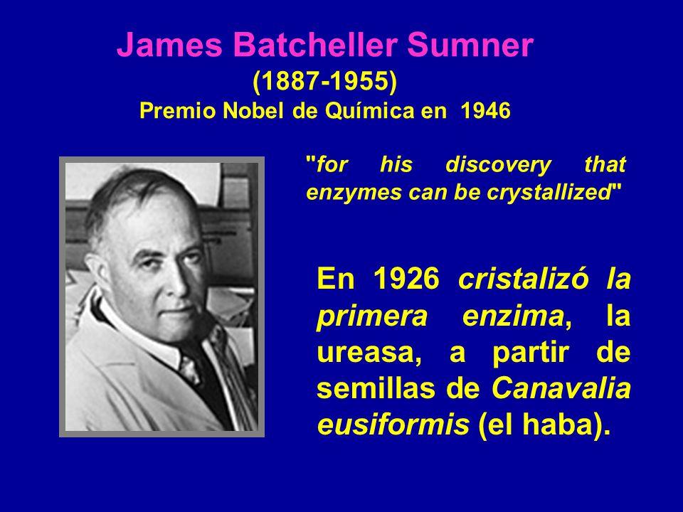 James Batcheller Sumner (1887-1955) Premio Nobel de Química en 1946