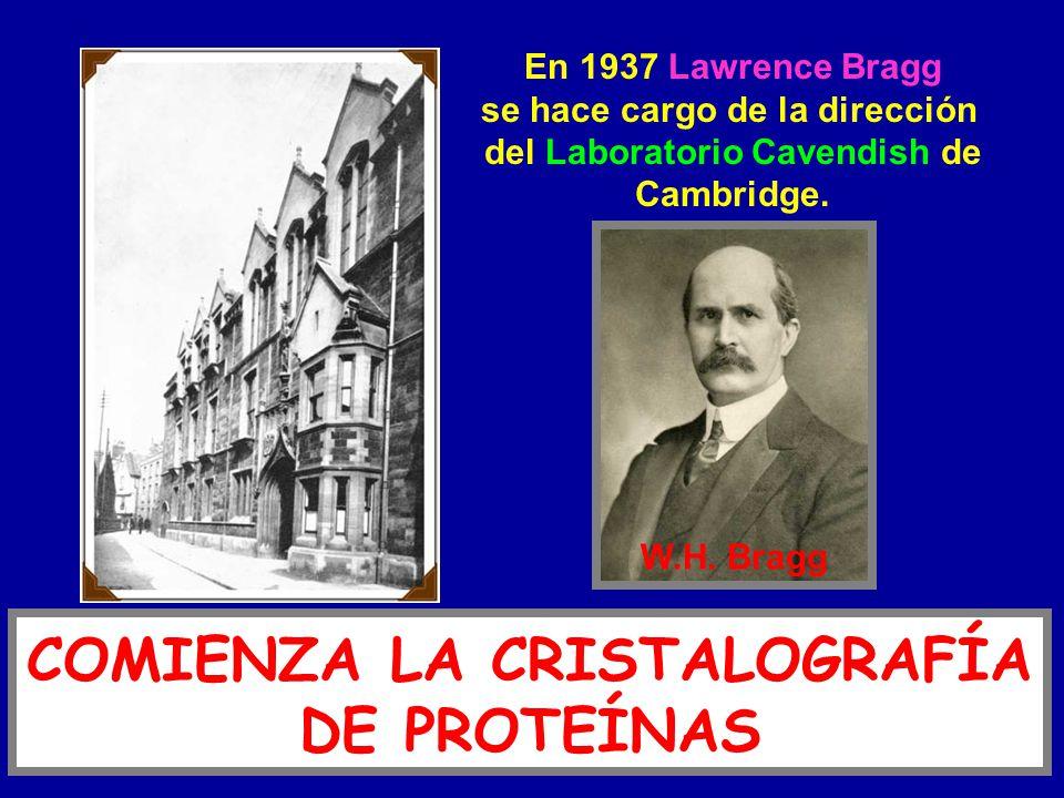 COMIENZA LA CRISTALOGRAFÍA DE PROTEÍNAS En 1937 Lawrence Bragg se hace cargo de la dirección del Laboratorio Cavendish de Cambridge. W.H. Bragg