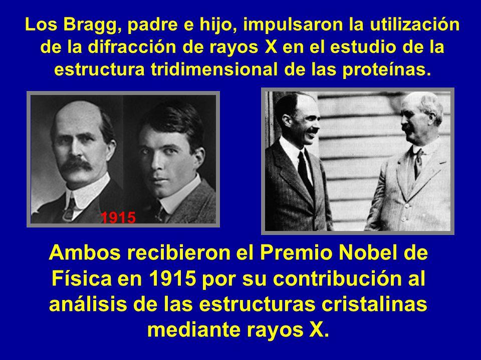 Los Bragg, padre e hijo, impulsaron la utilización de la difracción de rayos X en el estudio de la estructura tridimensional de las proteínas. Ambos r