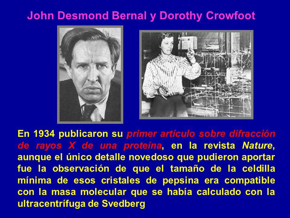 John Desmond Bernal y Dorothy Crowfoot En 1934 publicaron su primer artículo sobre difracción de rayos X de una proteína, en la revista Nature, aunque