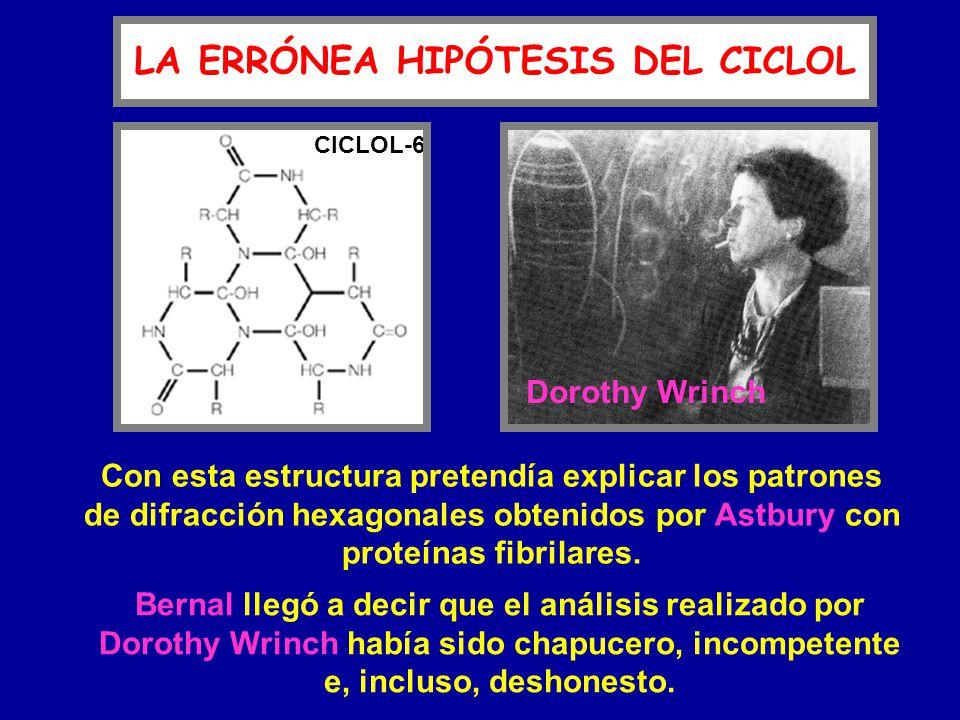 LA ERRÓNEA HIPÓTESIS DEL CICLOL CICLOL-6 Dorothy Wrinch Con esta estructura pretendía explicar los patrones de difracción hexagonales obtenidos por As