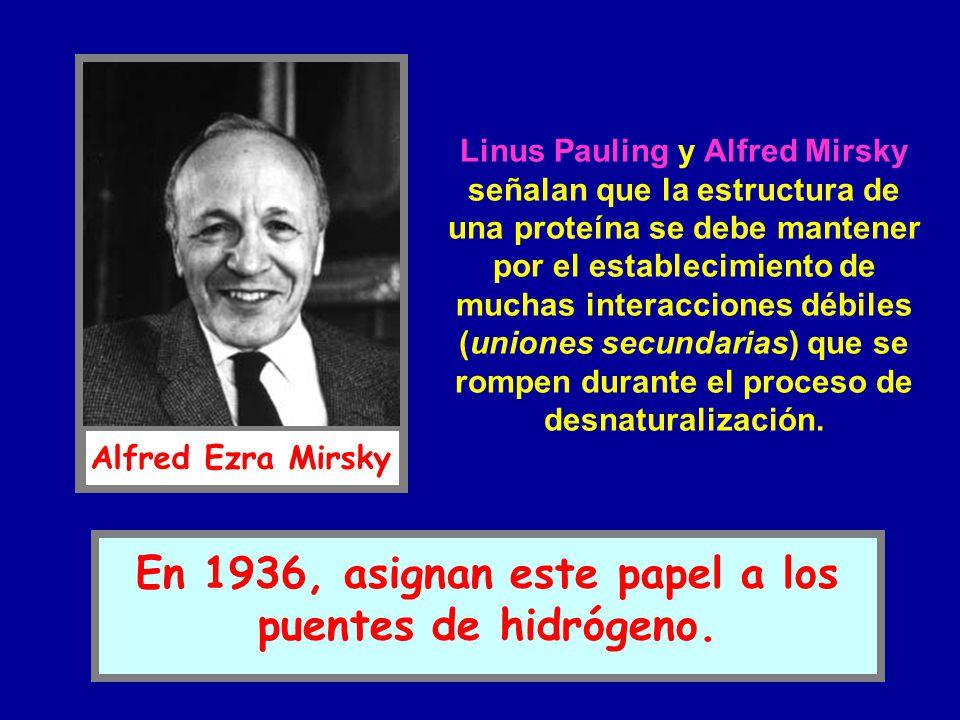 Linus Pauling y Alfred Mirsky señalan que la estructura de una proteína se debe mantener por el establecimiento de muchas interacciones débiles (union