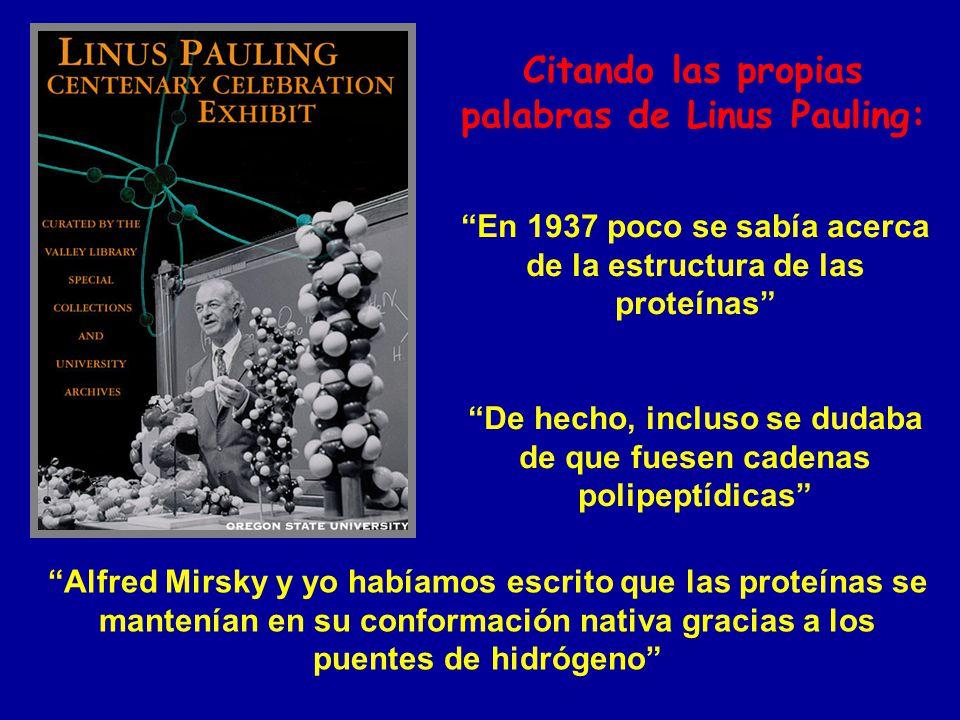 En 1937 poco se sabía acerca de la estructura de las proteínas De hecho, incluso se dudaba de que fuesen cadenas polipeptídicas Alfred Mirsky y yo hab