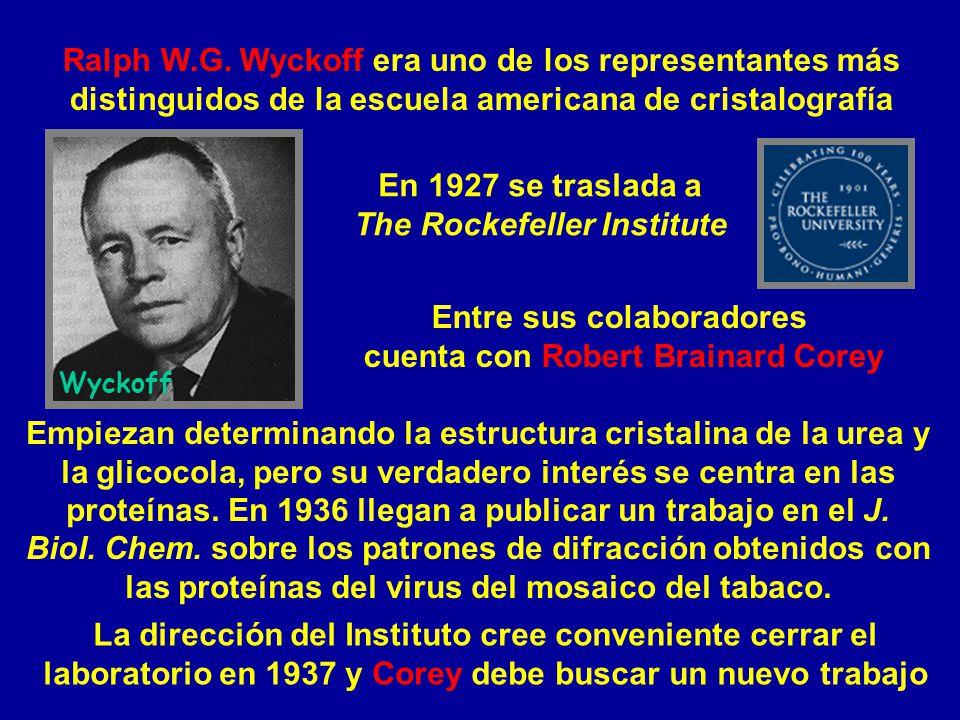 Ralph W.G. Wyckoff era uno de los representantes más distinguidos de la escuela americana de cristalografía Empiezan determinando la estructura crista