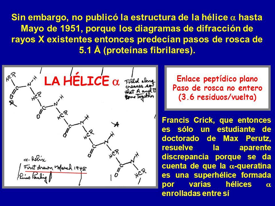 Enlace peptídico plano Paso de rosca no entero (3.6 residuos/vuelta) Sin embargo, no publicó la estructura de la hélice hasta Mayo de 1951, porque los
