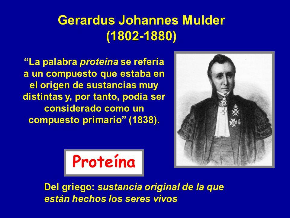 Gerardus Johannes Mulder (1802-1880) La palabra proteína se refería a un compuesto que estaba en el origen de sustancias muy distintas y, por tanto, p