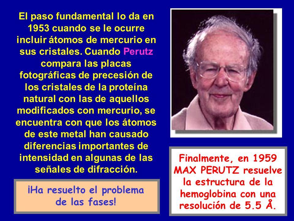 Finalmente, en 1959 MAX PERUTZ resuelve la estructura de la hemoglobina con una resolución de 5.5 Å. El paso fundamental lo da en 1953 cuando se le oc