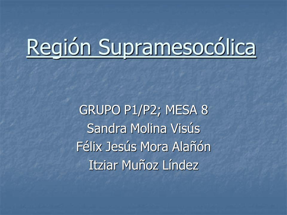 Región Supramesocólica GRUPO P1/P2; MESA 8 Sandra Molina Visús Félix Jesús Mora Alañón Itziar Muñoz Líndez