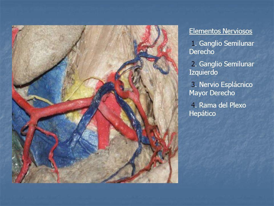Elementos Nerviosos 1.Ganglio Semilunar Derecho 2.
