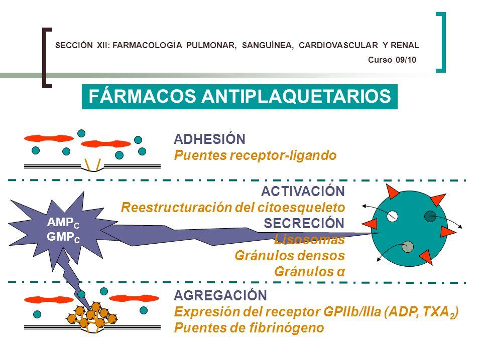 FÁRMACOS ANTIPLAQUETARIOS ADHESIÓN Puentes receptor-ligando AGREGACIÓN Expresión del receptor GPIIb/IIIa (ADP, TXA 2 ) Puentes de fibrinógeno ACTIVACI