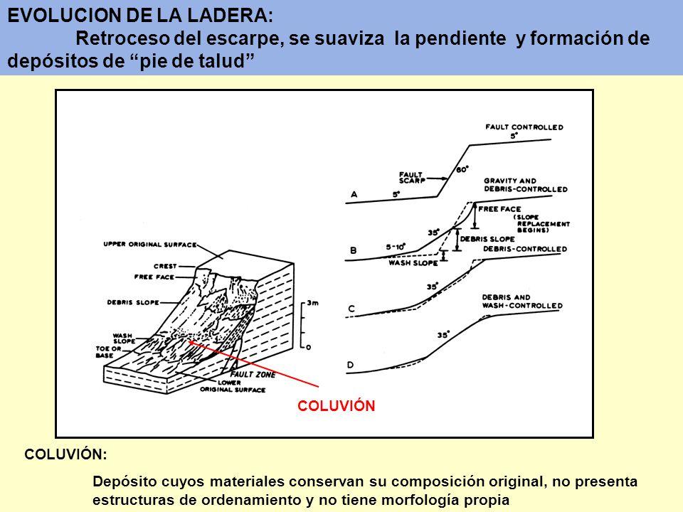 EVOLUCION DE LA LADERA: Retroceso del escarpe, se suaviza la pendiente y formación de depósitos de pie de talud COLUVIÓN COLUVIÓN: Depósito cuyos mate