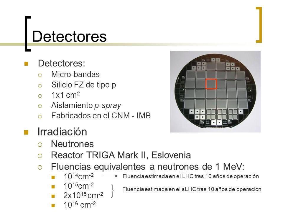 Detectores Detectores: Micro-bandas Silicio FZ de tipo p 1x1 cm 2 Aislamiento p-spray Fabricados en el CNM - IMB Irradiación Neutrones Reactor TRIGA M