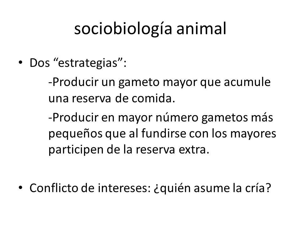 sociobiología animal Dos estrategias: -Producir un gameto mayor que acumule una reserva de comida. -Producir en mayor número gametos más pequeños que
