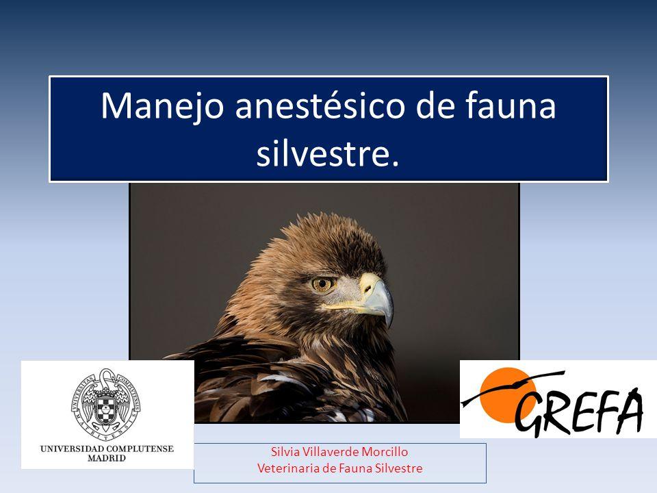 Manejo anestésico de fauna silvestre. Silvia Villaverde Morcillo Veterinaria de Fauna Silvestre